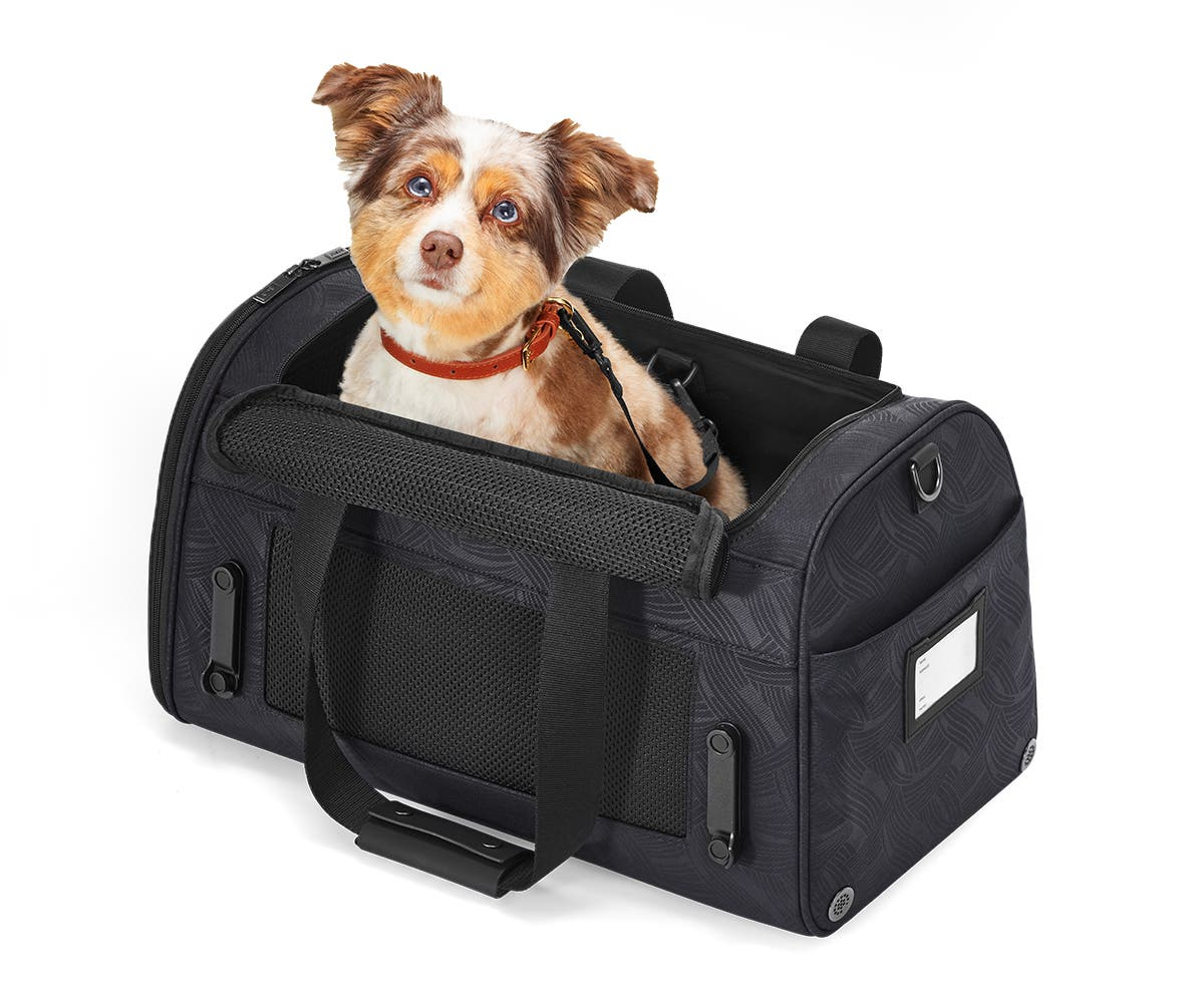 The Pet Carrier Away Built For Modern Travel